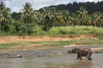 Saanya Gulati's Blog, Kandy, Elephant Orphanage